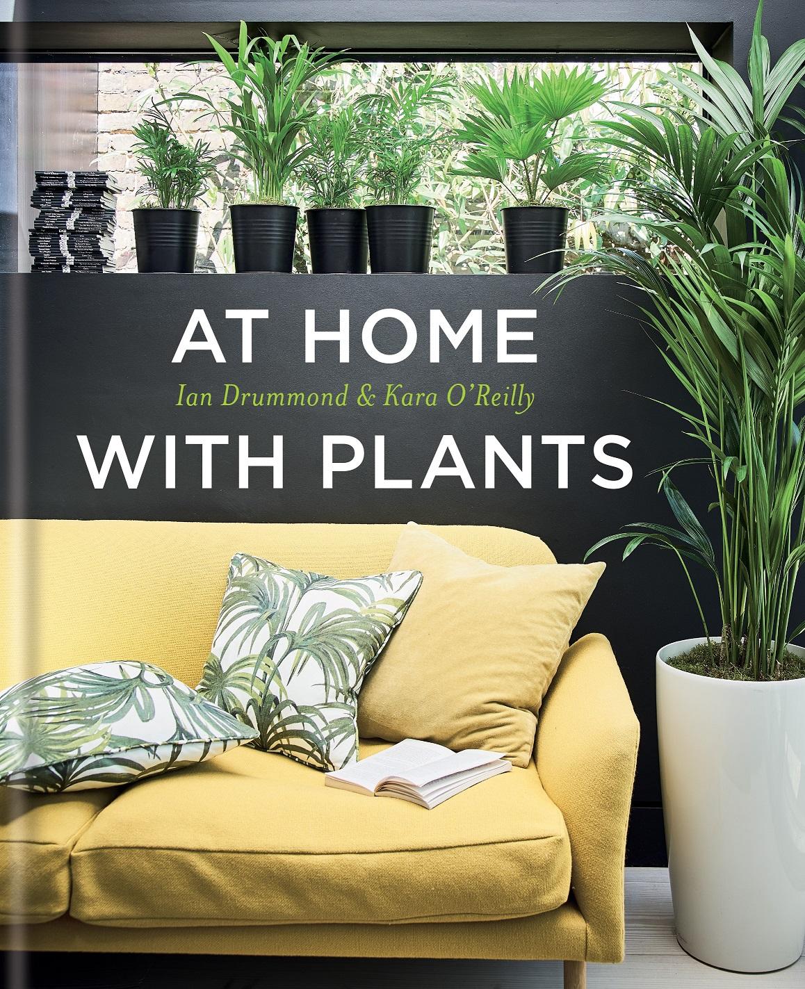Christmas Plant Amaryllis