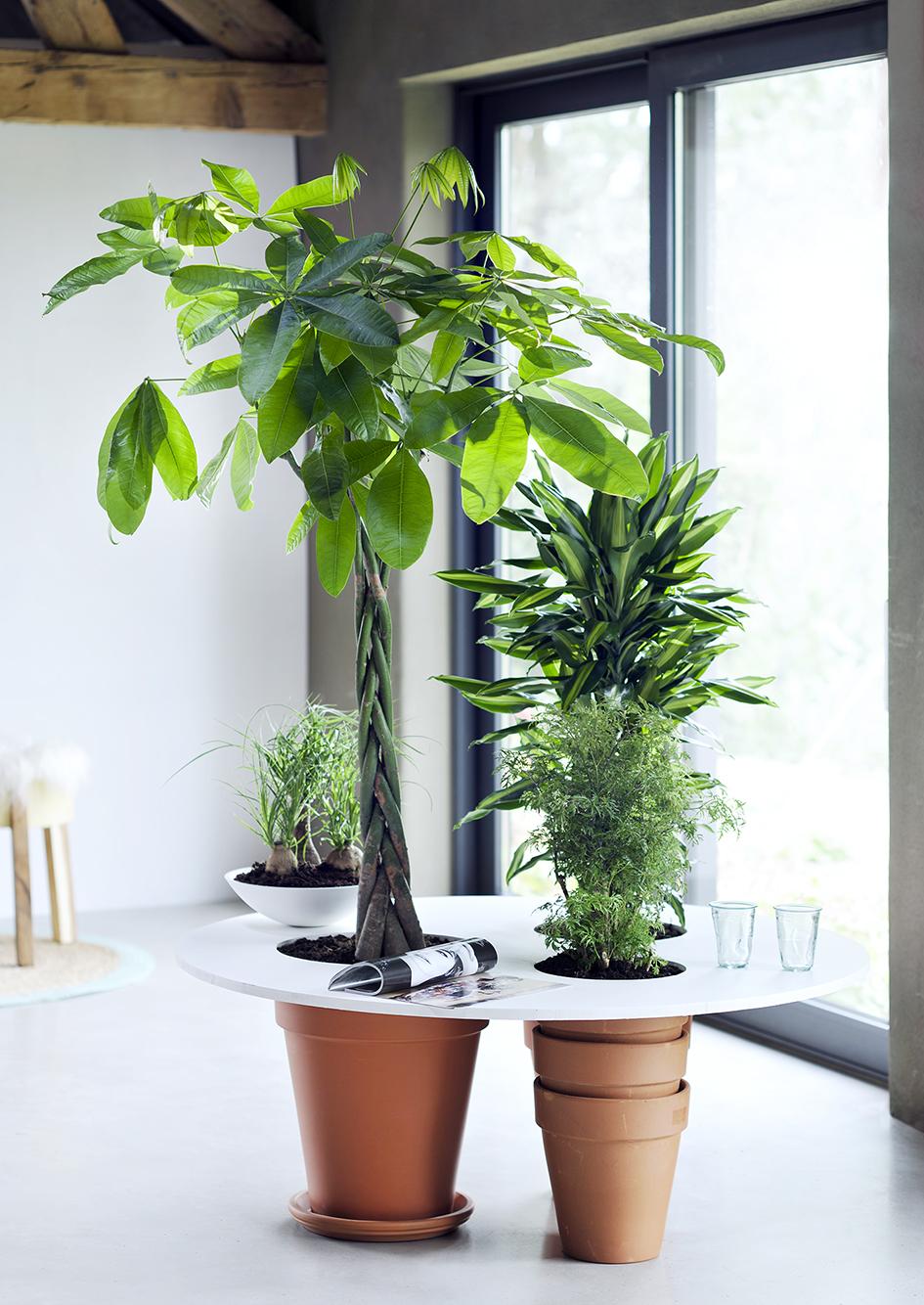 Diy Tip Multifunctional Indoor Trees The Joy Of Plants