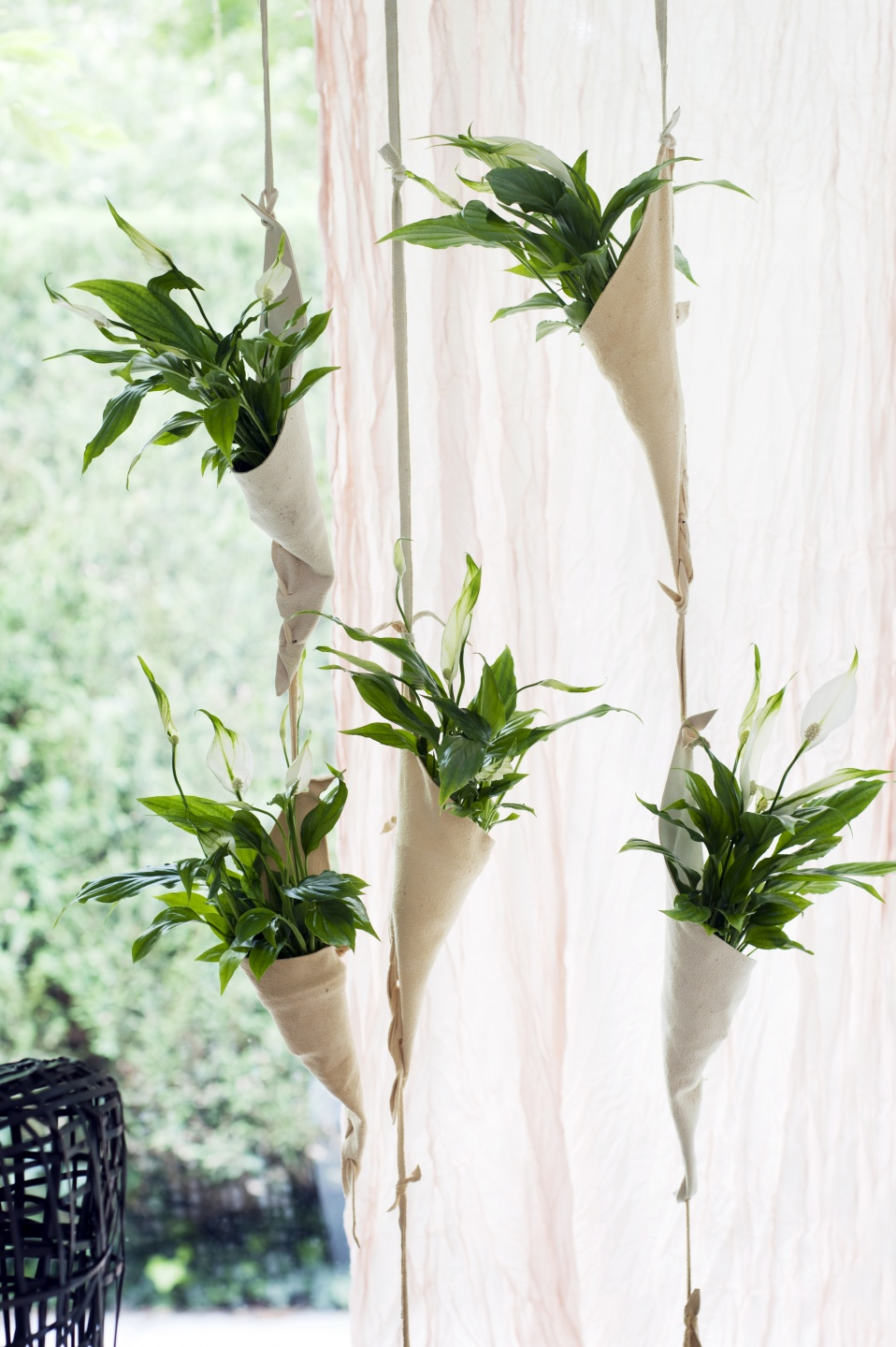 Diy tip a curtain of peace lilies the joy of plants for Yucca wohnzimmer