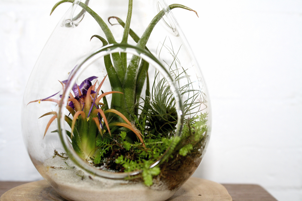 All about air plants | The joy of plants