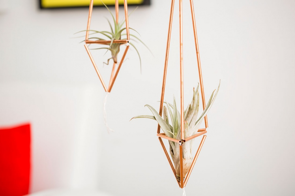 Plant Food For Christmas Cactus