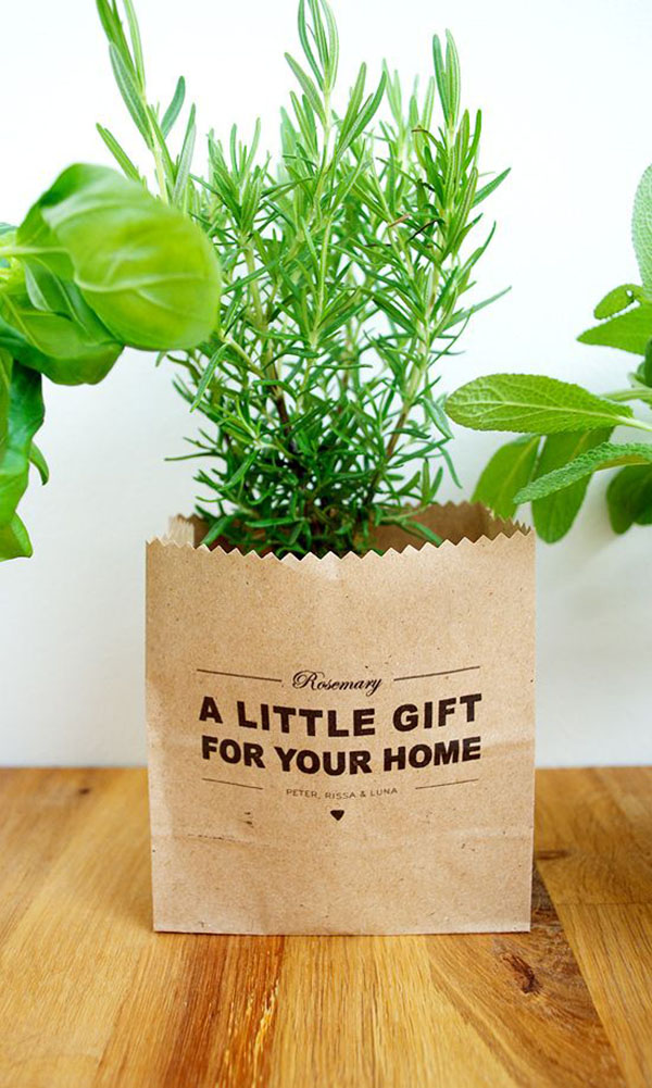 thenewdomestic Best Housewarming Plant on best sympathy plant, best food plant, best good luck plant, best type of gift to give as a plant, best coffee plant, best roses plant,