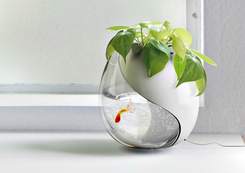 Introducing the fish bowl planter the joy of plants for Fish bowl with plant on top