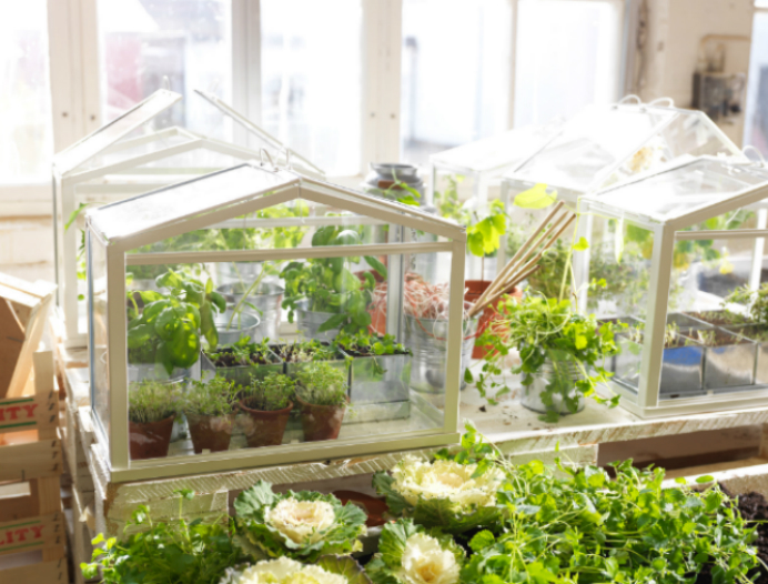 Diy make your own mini greenhouse the joy of plants for Build own greenhouse