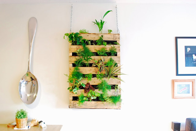 Lovely Living Walls on Thejoyofplants.co.uk