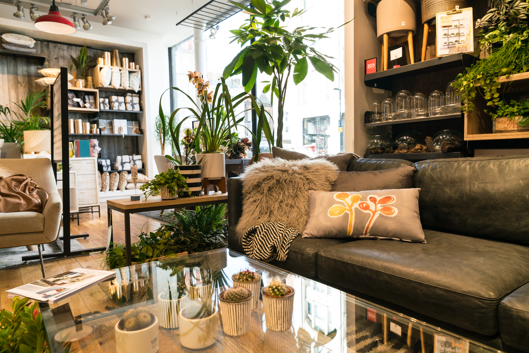 erica davies 39 top 10 interior plant styling tips the joy. Black Bedroom Furniture Sets. Home Design Ideas