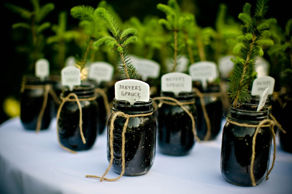 Creative Wedding Favours The Joy Of Plants