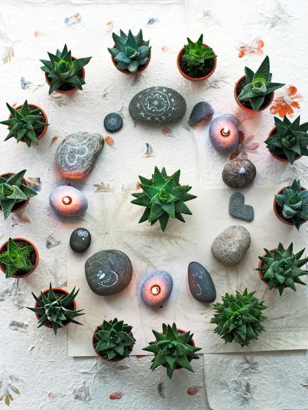 Circle of Life Aloe vera Thejoyofplants.co.uk