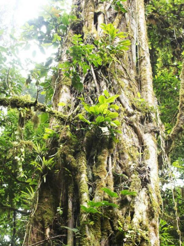 Costa Rica's unique flora hotspots Thejoyofplants.co.uk