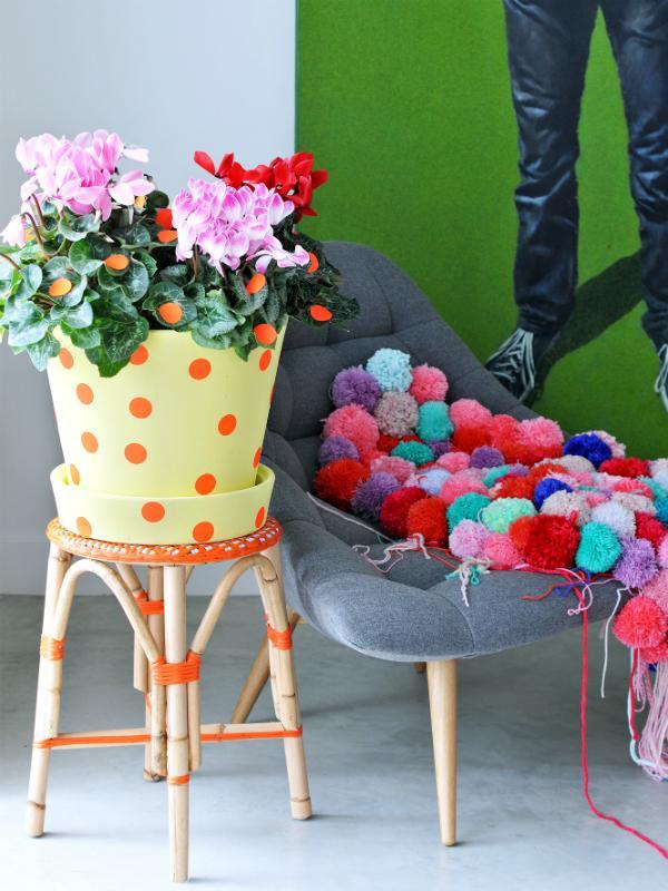 Cyclamen Thejoyofplants.co.uk