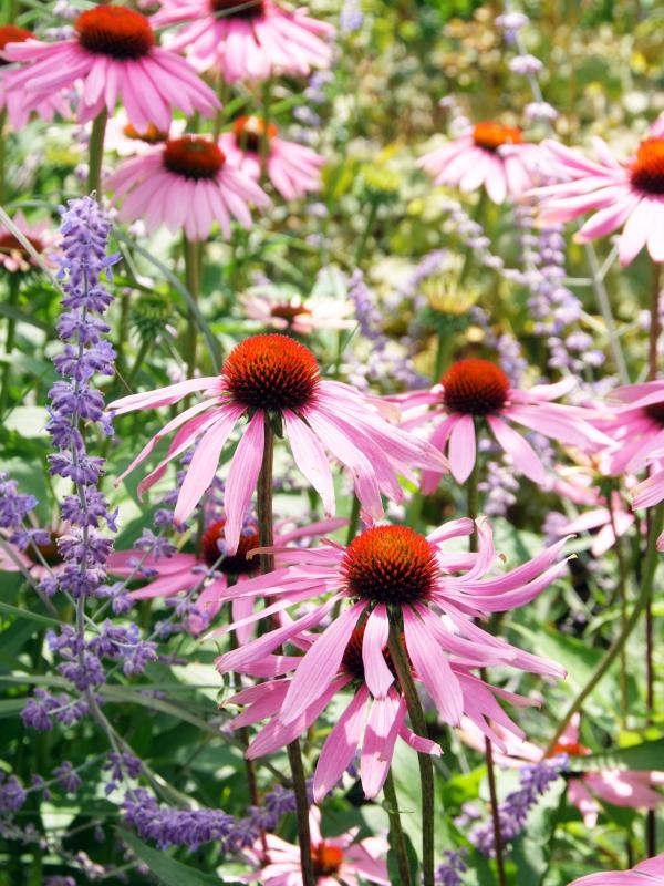 Zur summer bouquet will set your garden ablaze, thejoyofplants