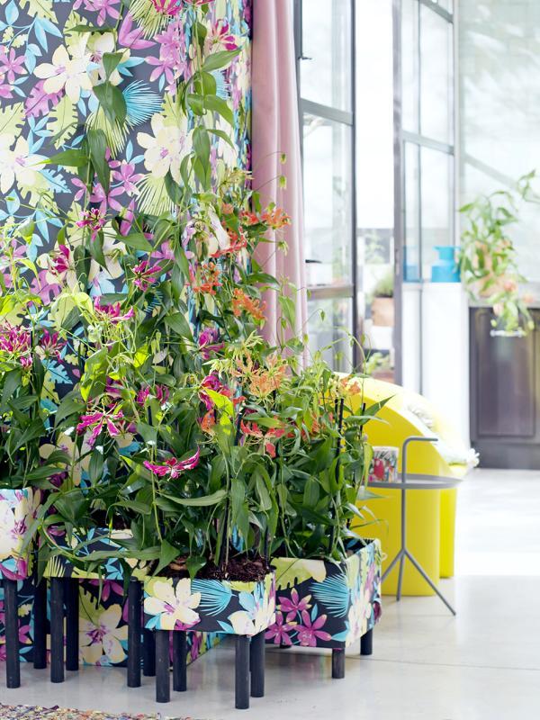 Gloriosa Thejoyofplants.co.uk