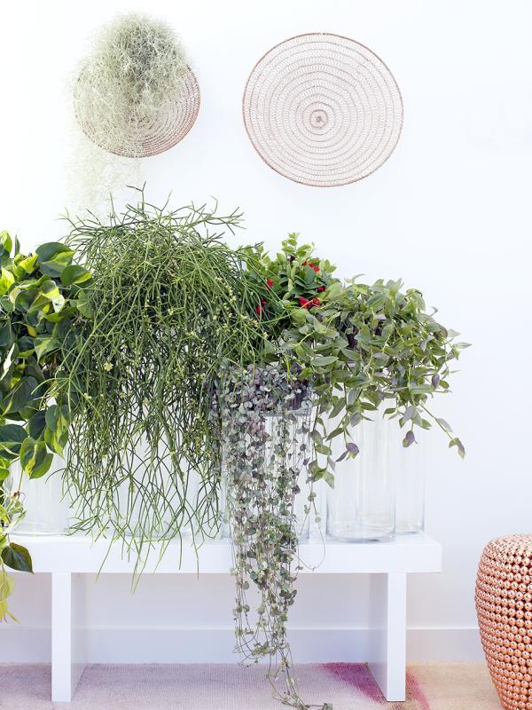 Hanging plants Thejoyofplants.co.uk