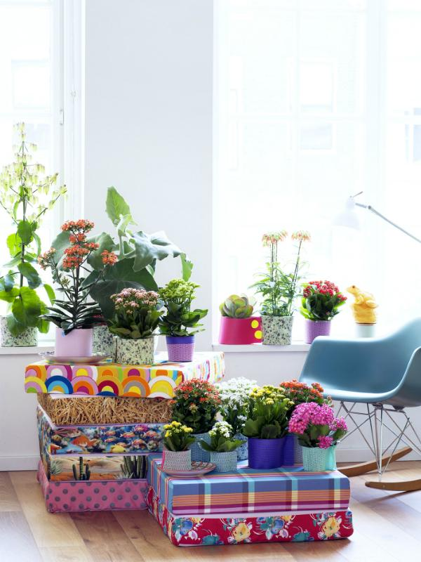 It's going to be a blooming summer with colourful Kalanchoe Thejoyofplants.co.uk