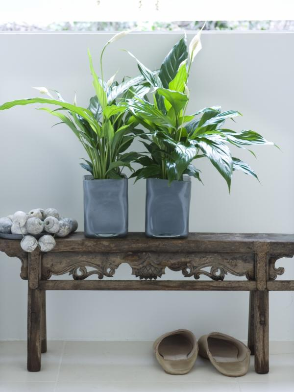 air-cleaning plants - Thejoyofplants.co.uk