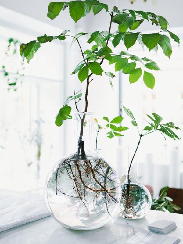 Grow plant cuttings in water - Thejoyofplants.co.uk