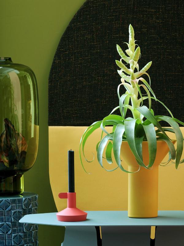 Tillandsia Thejoyofplants.co.uk