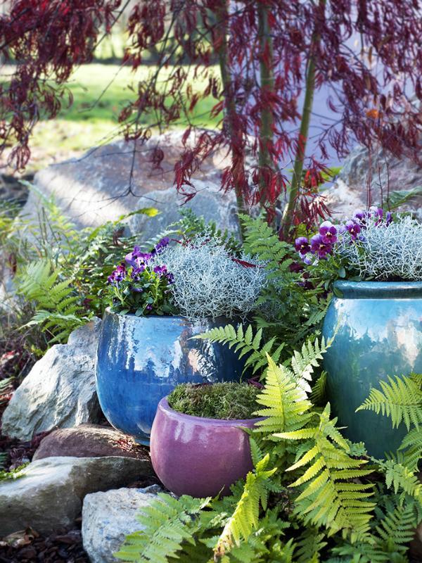 Silver Bush Thejoyofplants.co.uk