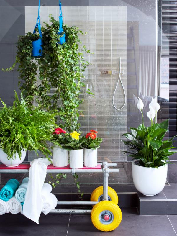 Transform your  bathroom into a spa with the aid of plants Thejoyofplants.co.uk