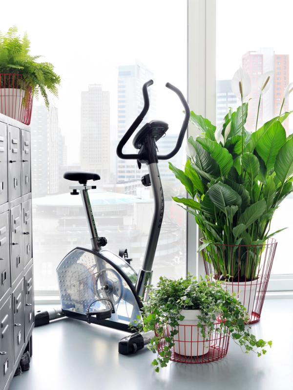 Pure green: the most beautiful air filters ever Thejoyofplants.co.uk
