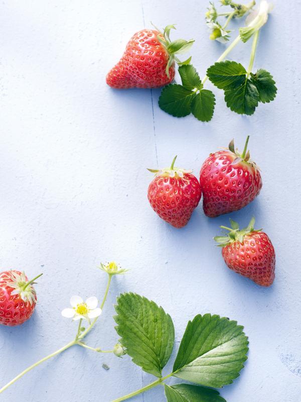 DIY: Home-made sugar-free strawberry jam -  Thejoyofplants.co.uk